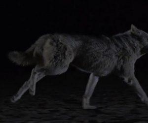the-kills-siberian-nights-920